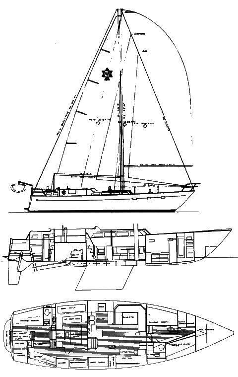 MAPLE LEAF 48 drawing