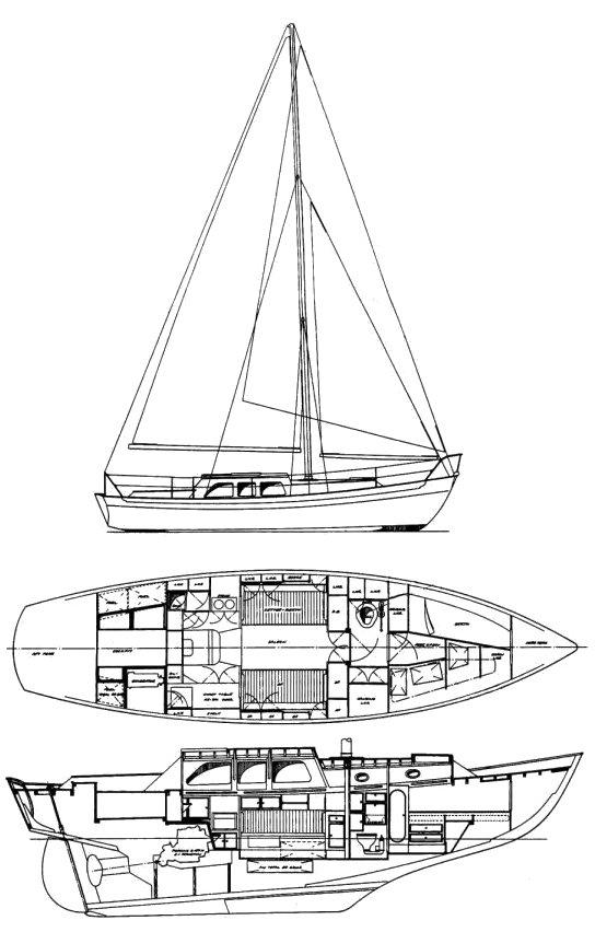 ROSE RAMBLER 35 (LAURENT GILES) drawing
