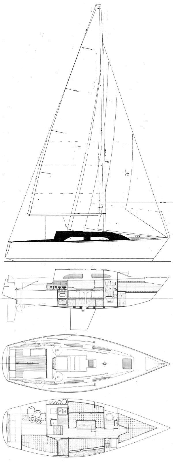 WHITING 29 drawing